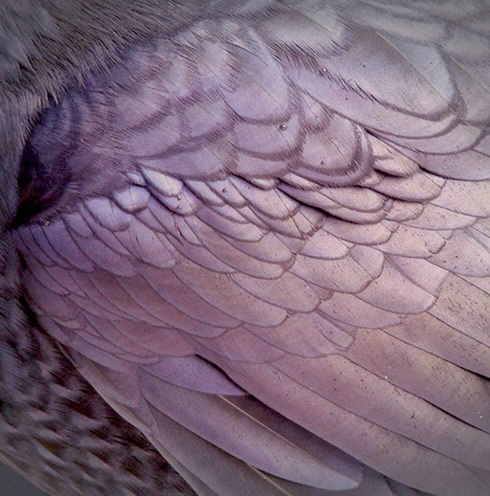 Photo d'aile illustrant l'usage de filtre dans la photo, donc chez les lunetiers