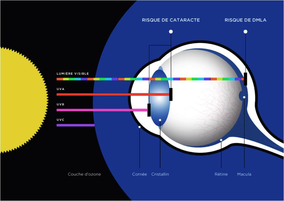 Schéma opticien et lunetier :lumière visible